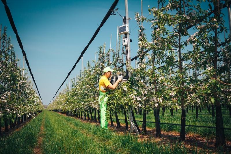 яблочные сады украинской компании в цвету